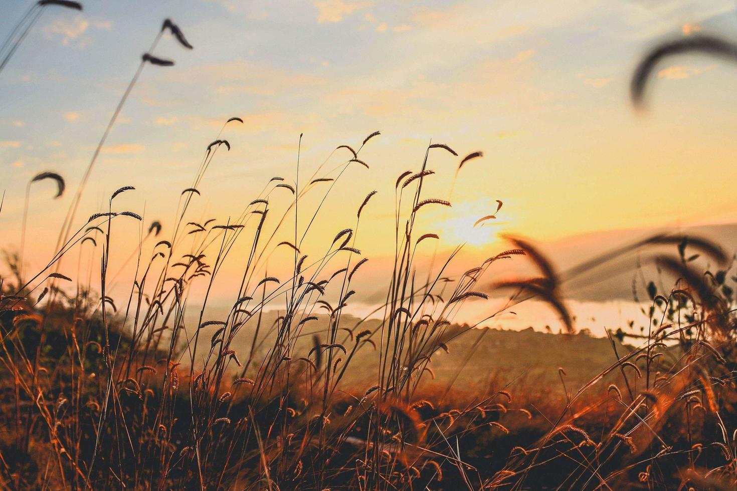 Silhouette einer Wiese bei Sonnenuntergang foto