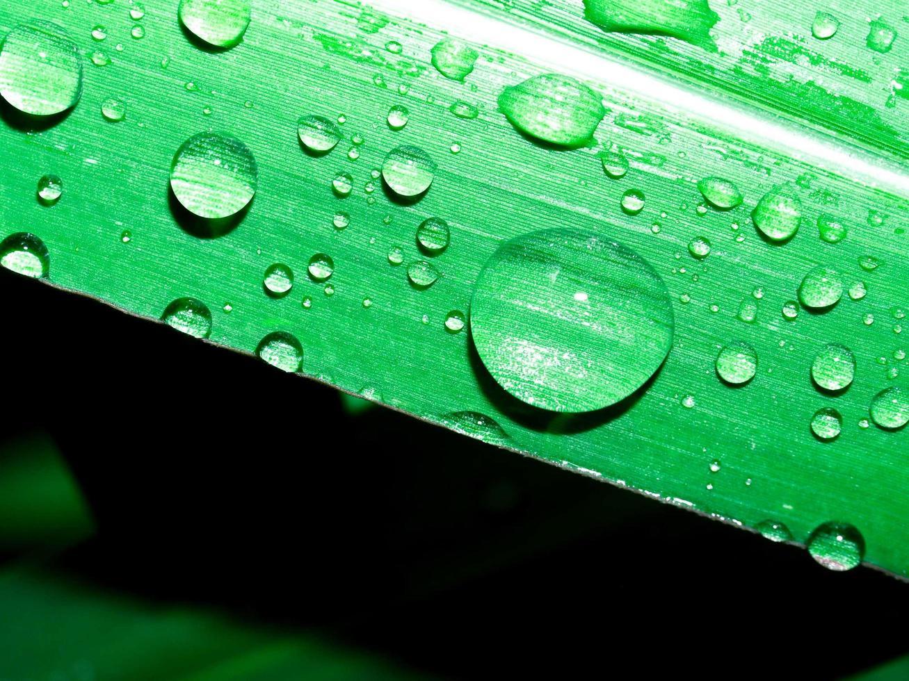 Wassertropfen auf Blatt foto