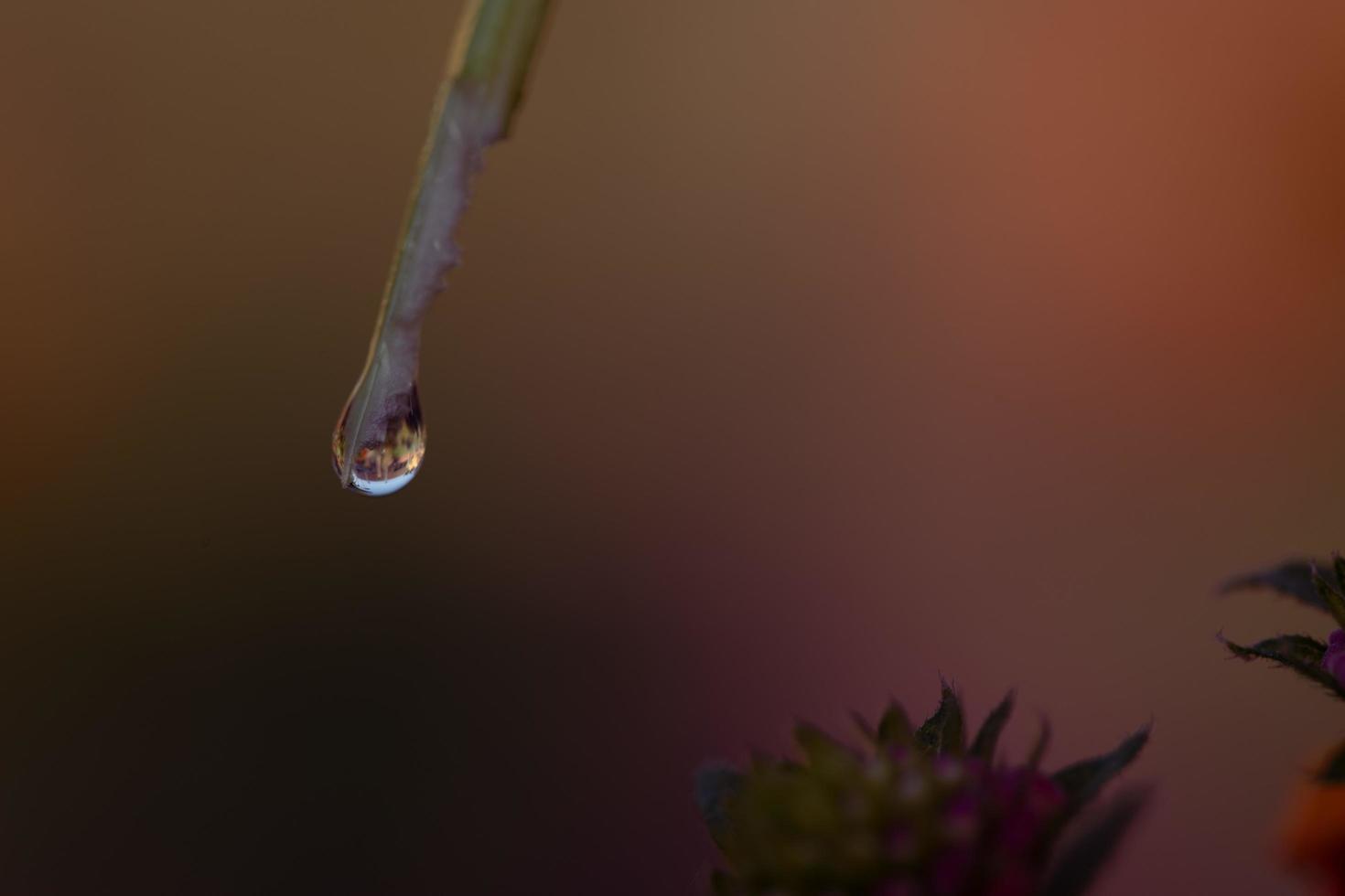Regentropfen auf einem Blatt foto