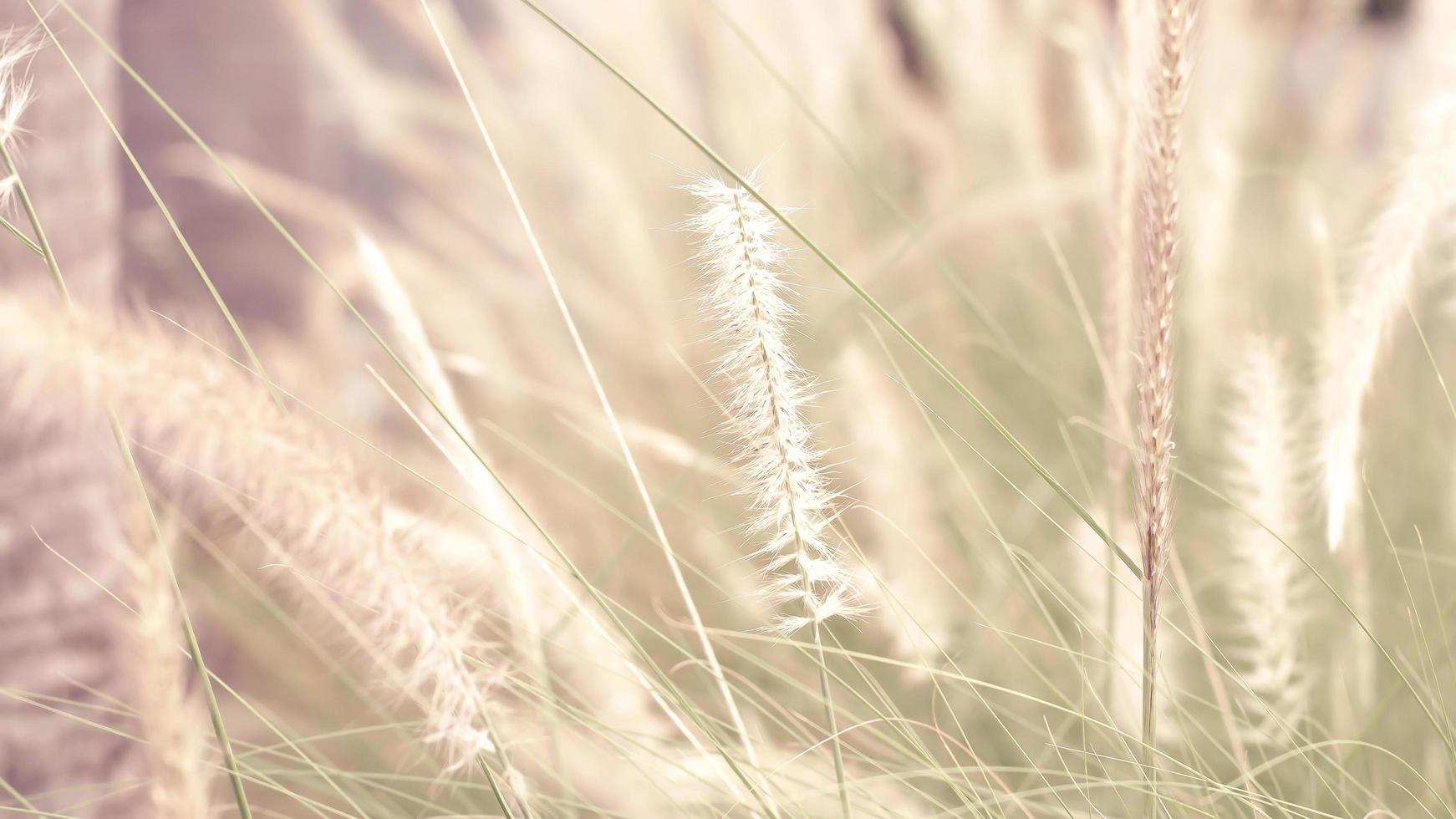 Weichzeichner wilde Grasblumen foto