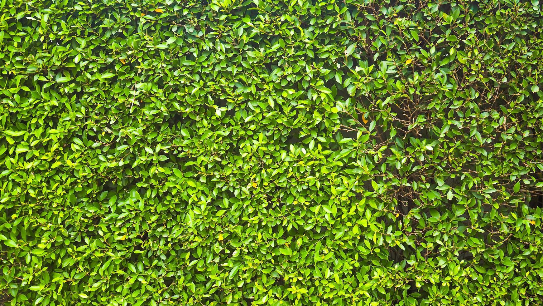 grüne Graswandbeschaffenheit foto