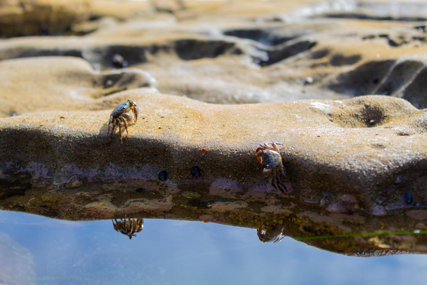 zwei Krabben in der Nähe von Wasser foto