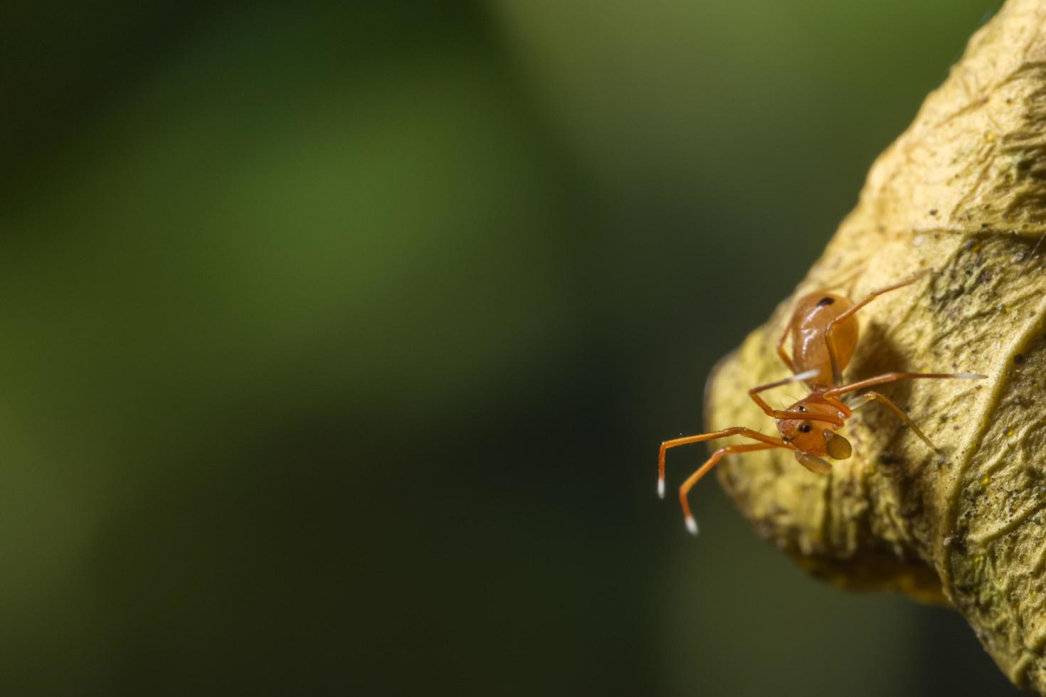 Spinne auf einem Blatt, Nahaufnahme. foto
