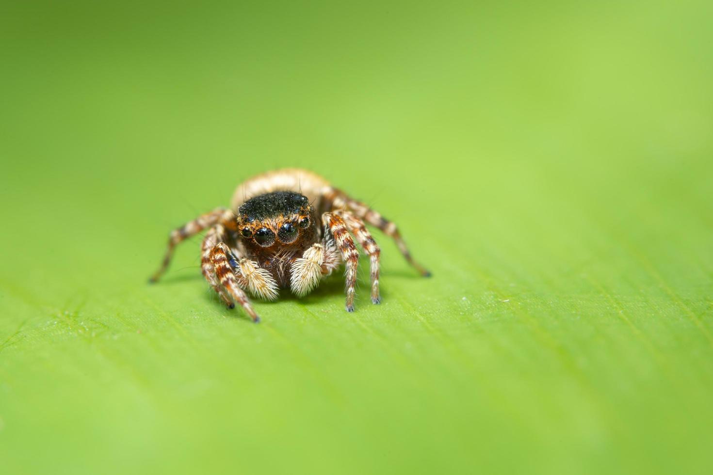 Spinne auf einem Blatt, Nahaufnahme foto