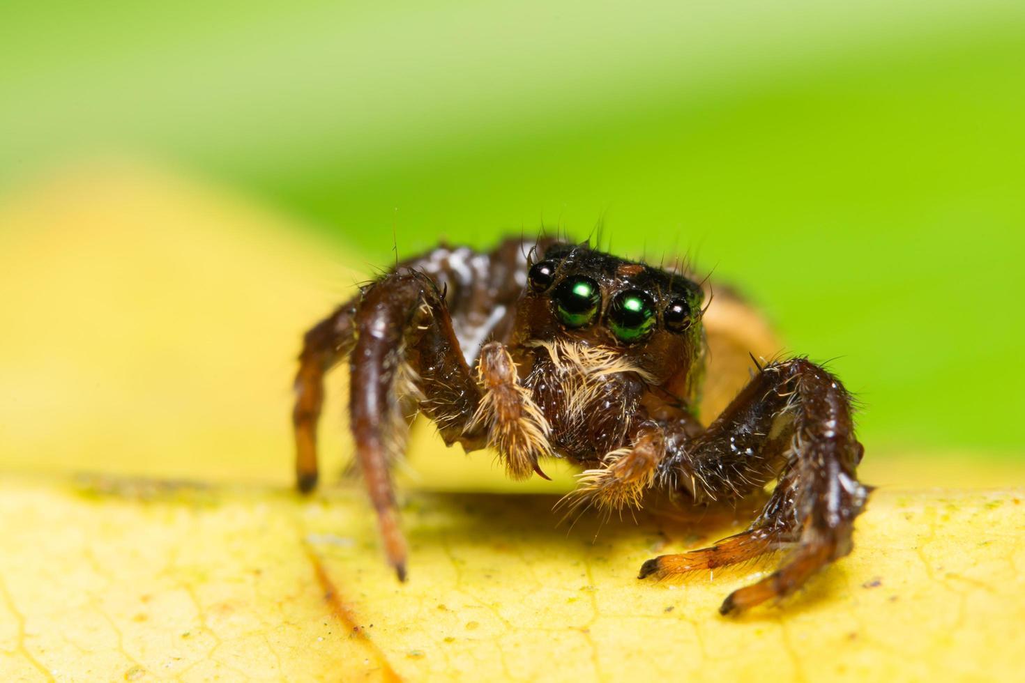 Spinne auf einem gelben Blatt foto