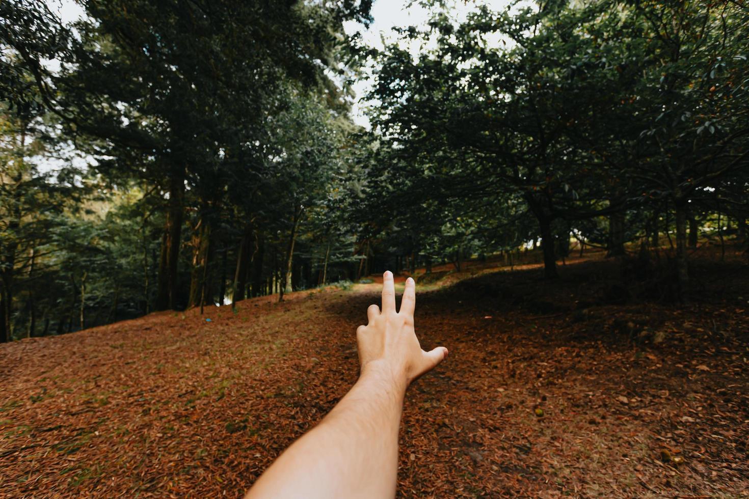 Hand mitten im Wald foto