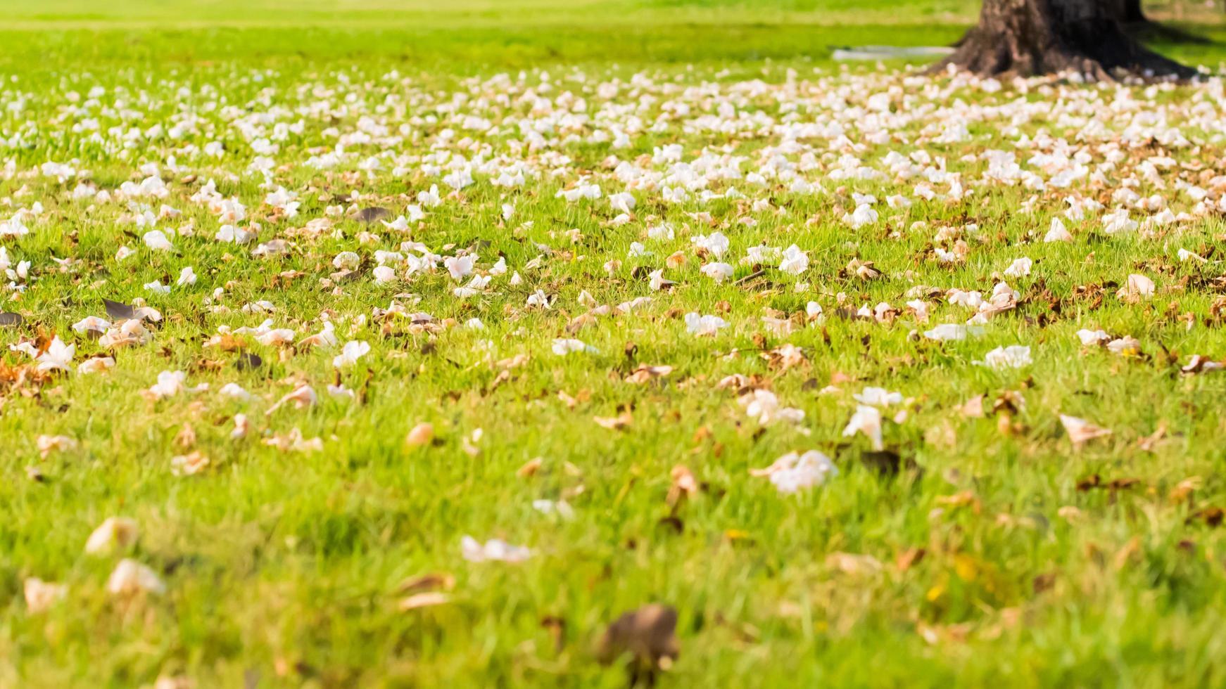 Nahaufnahme einer Rasenfläche foto