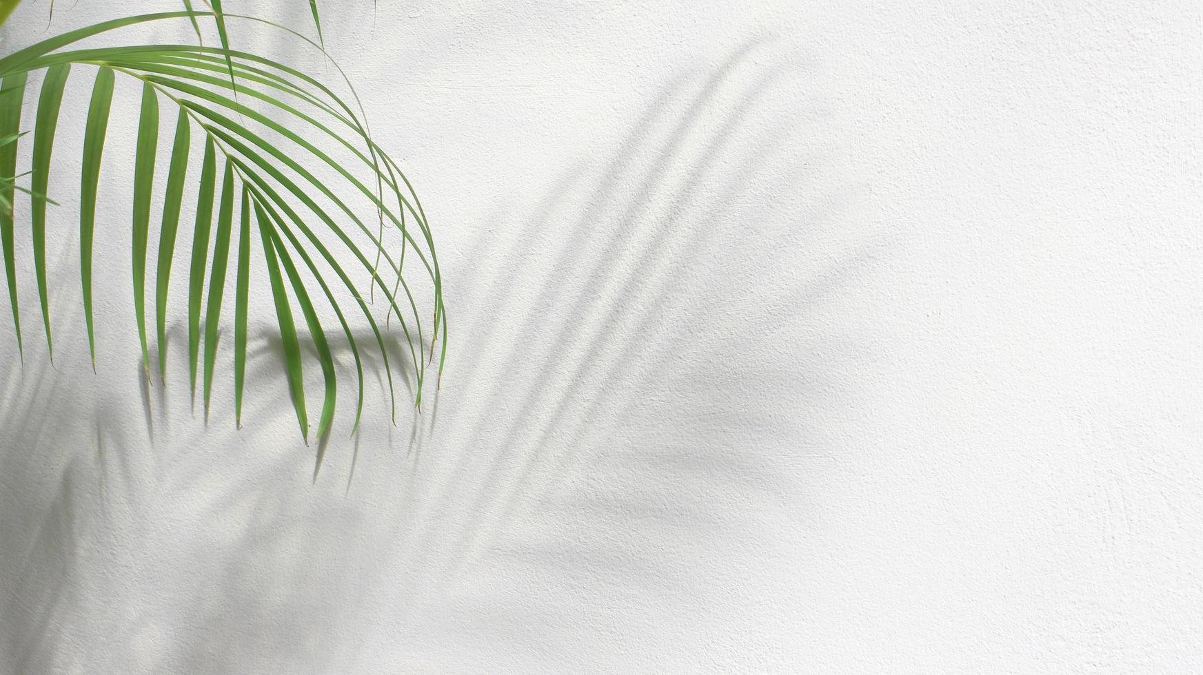 grüne Palmenblätter mit Schatten auf weißem Hintergrund foto