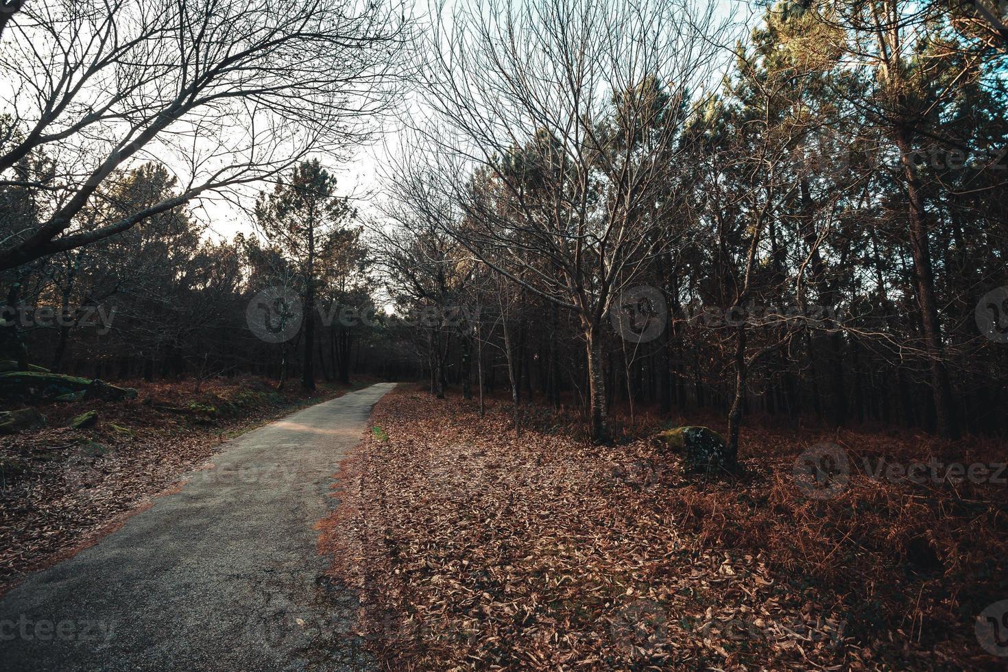 Straße durch den Wald während eines Herbsttages mit Kopierraum foto