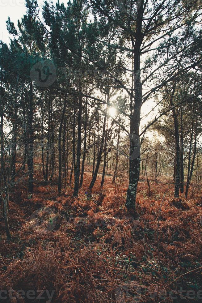 super bunter Wald mit bunten Büschen foto