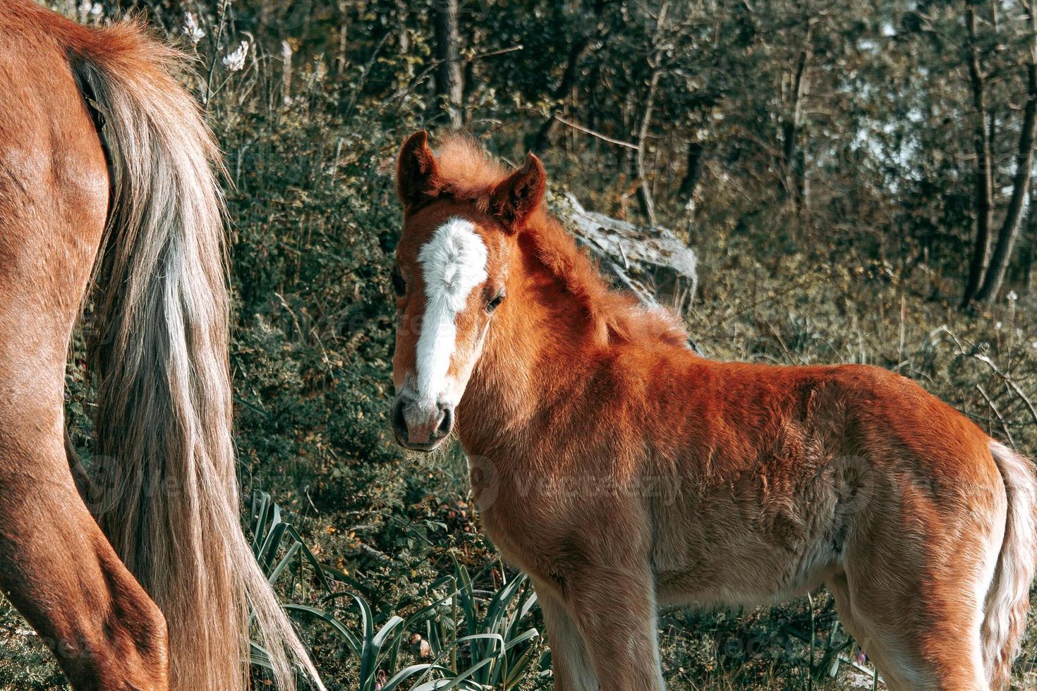 süßes braunes Babypferd foto