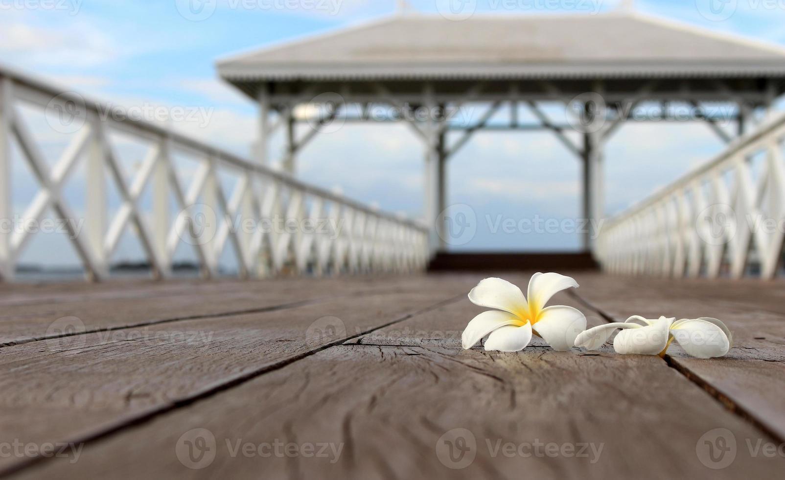 weiße Frangipani-Blume, Plumeria-Blume auf der Holzbrücke foto