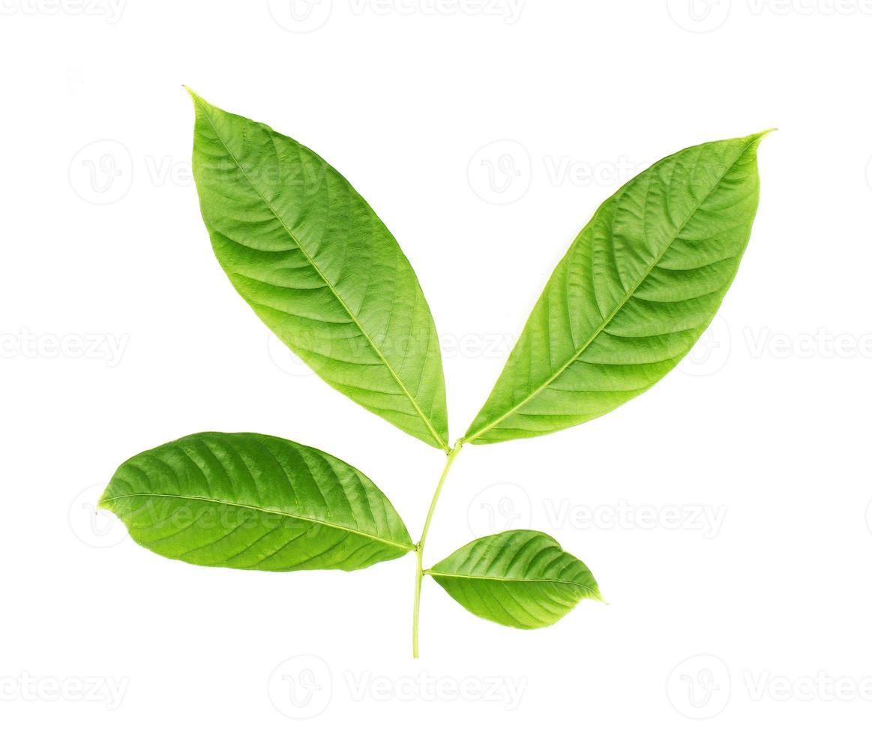 Blätter auf weißem Hintergrund foto