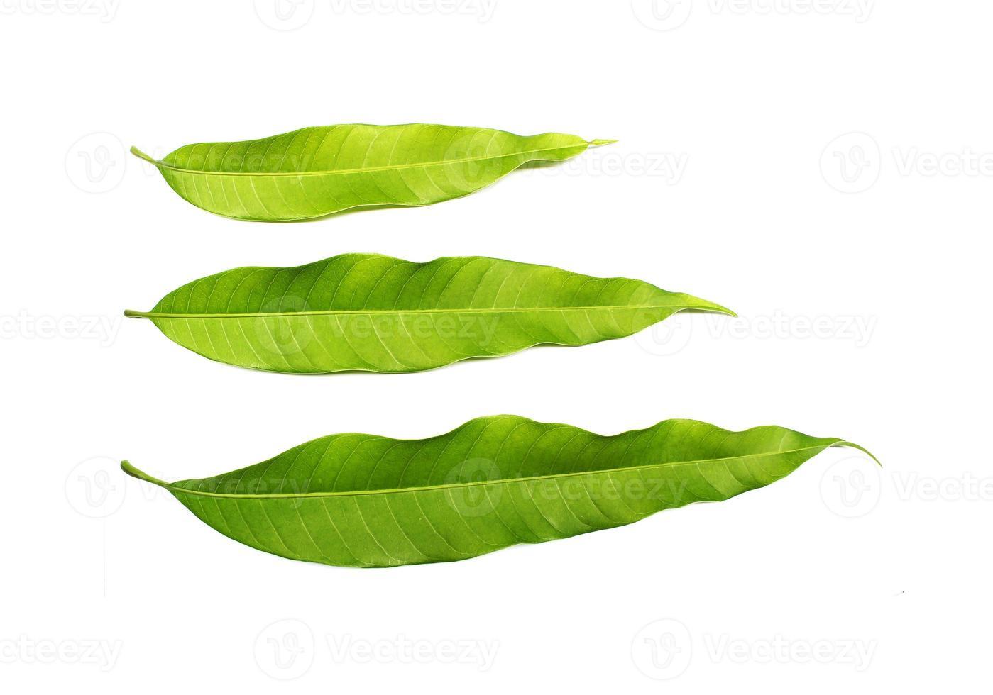 Blätter isoliert auf weißem Hintergrund foto