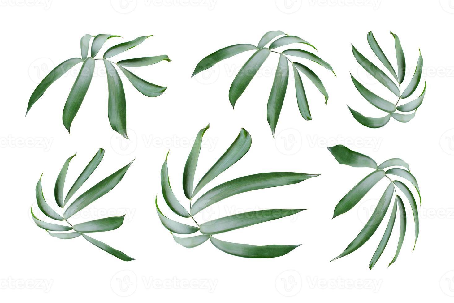 grüne Blätter lokalisiert auf weißem Hintergrund foto