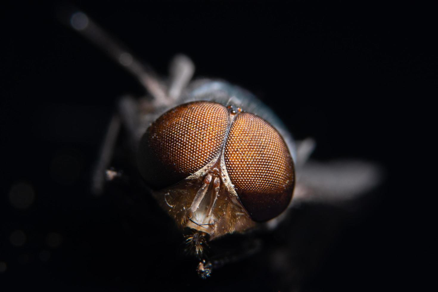 Augen einer Fliege, Makro foto