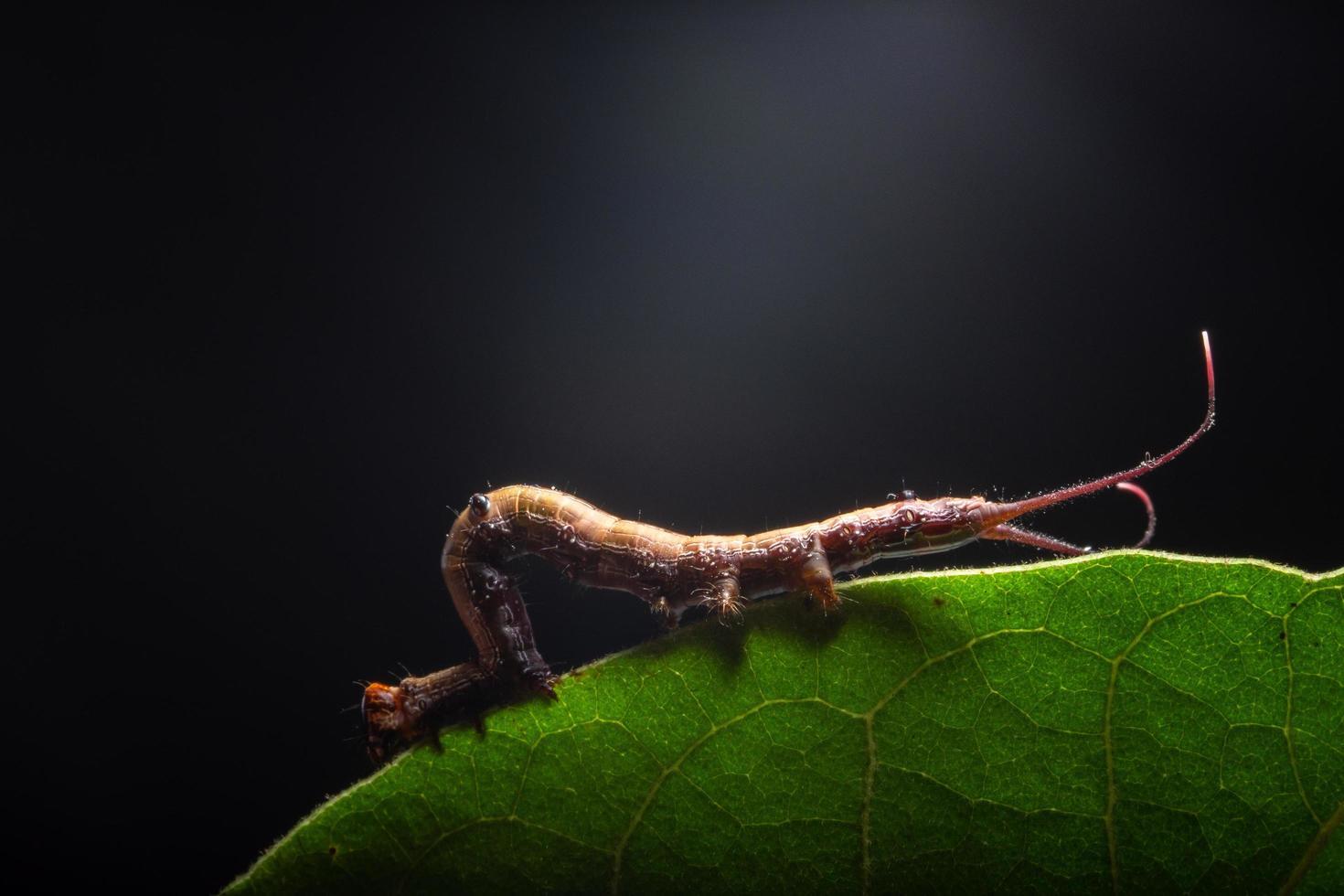 Wurm auf einem Blatt foto