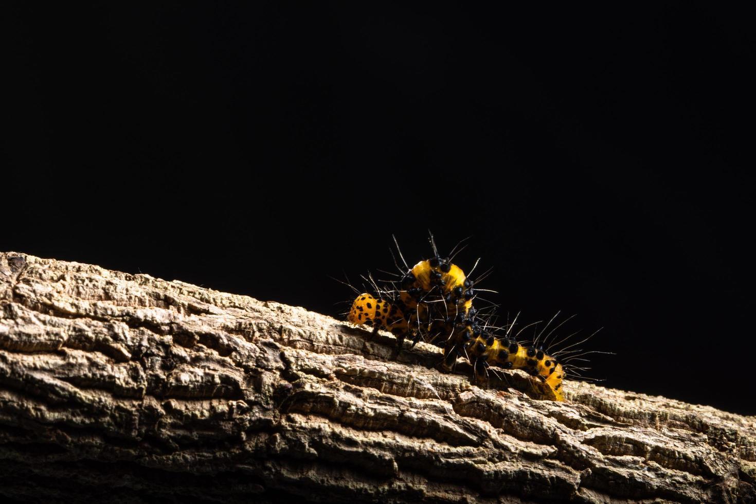 Wurm auf einem Baum foto