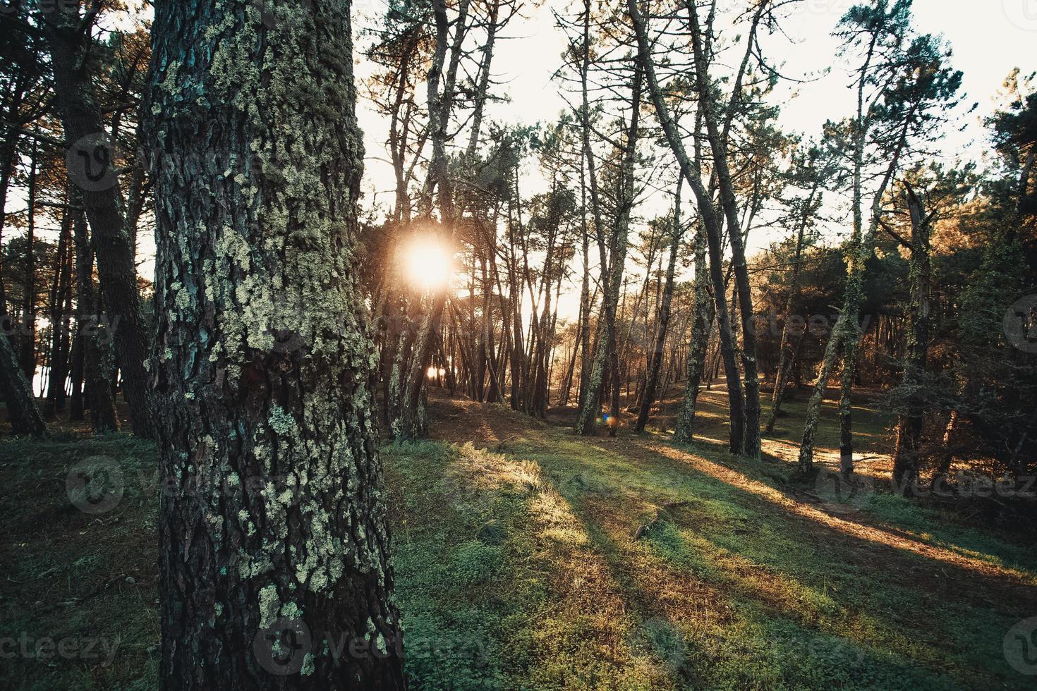 Wald während eines Sonnenuntergangs foto