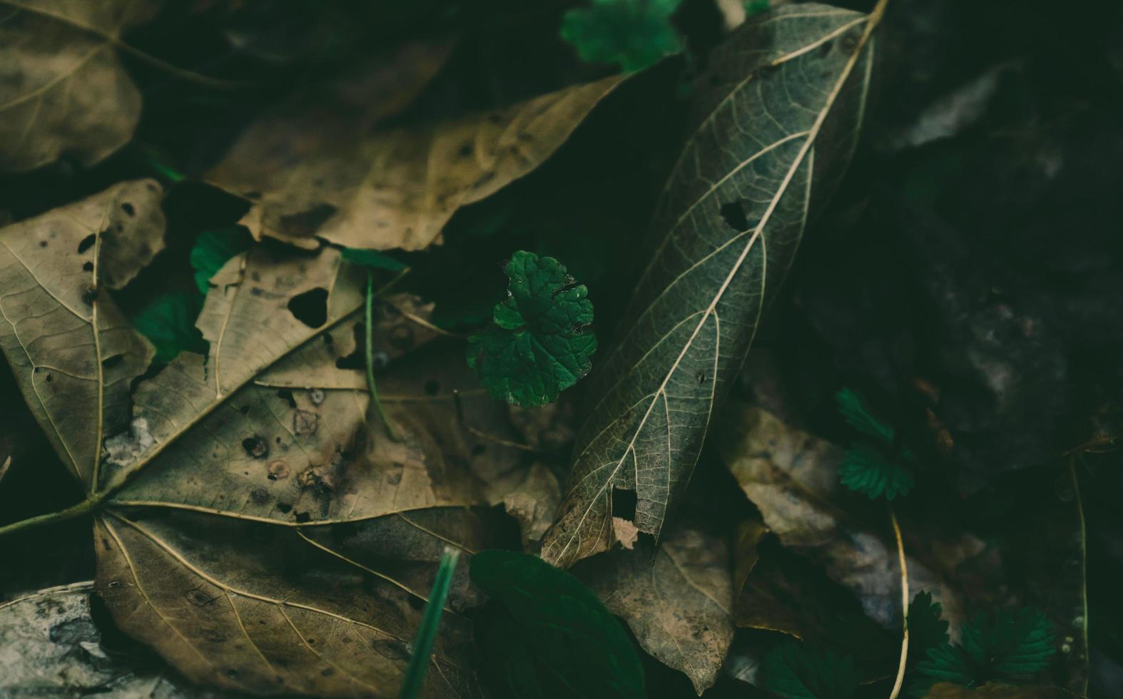 tagsüber braune verwelkte Blätter foto