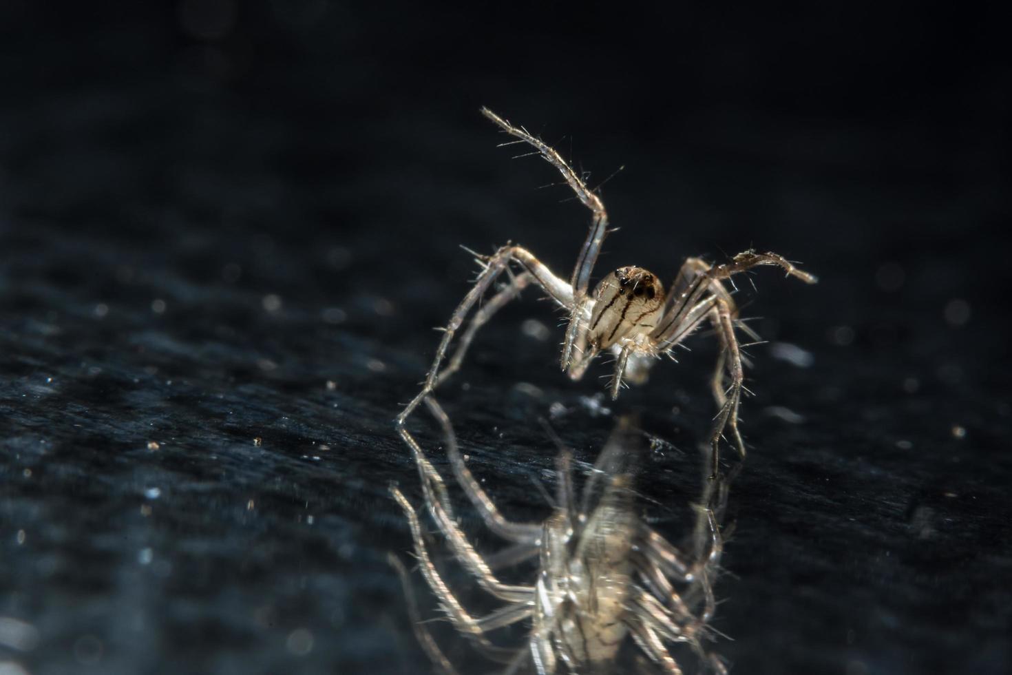 Spinne auf Glasoberfläche foto