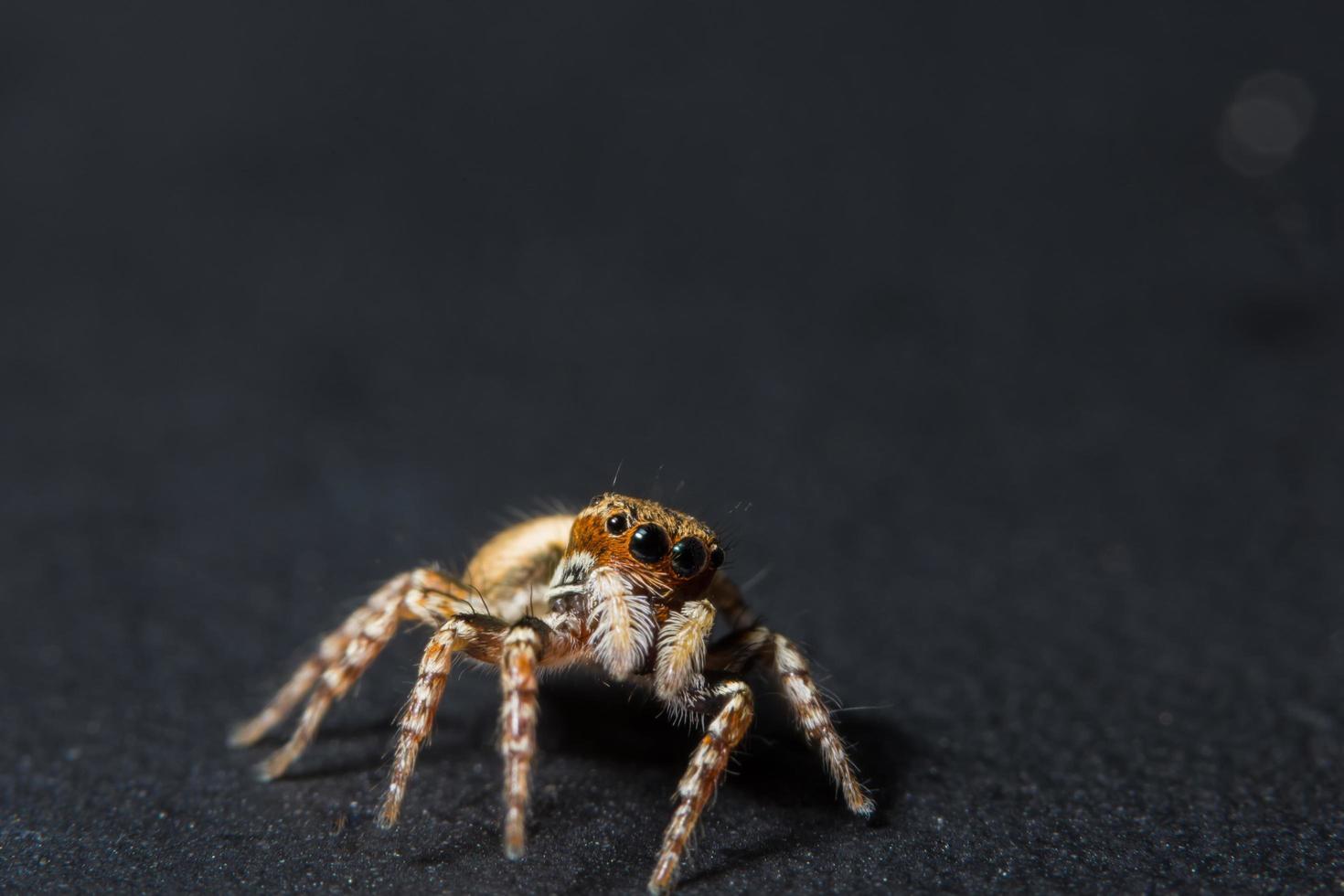 Spinne auf schwarzem Hintergrund foto