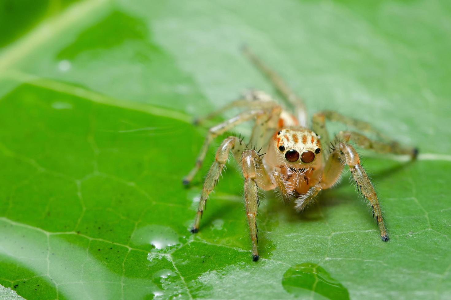 Spinne auf einem Blatt foto