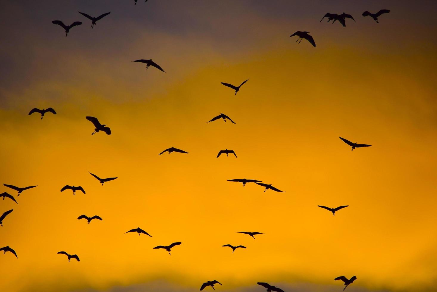 Silhouette der fliegenden Vögel foto