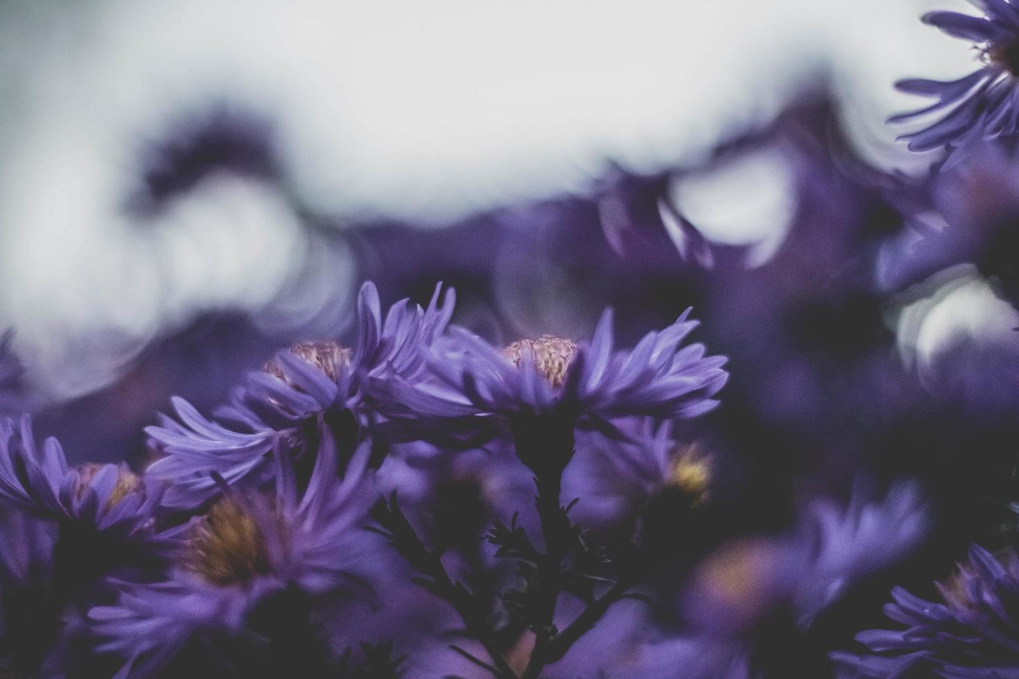 lila Blumen in einem Feld foto