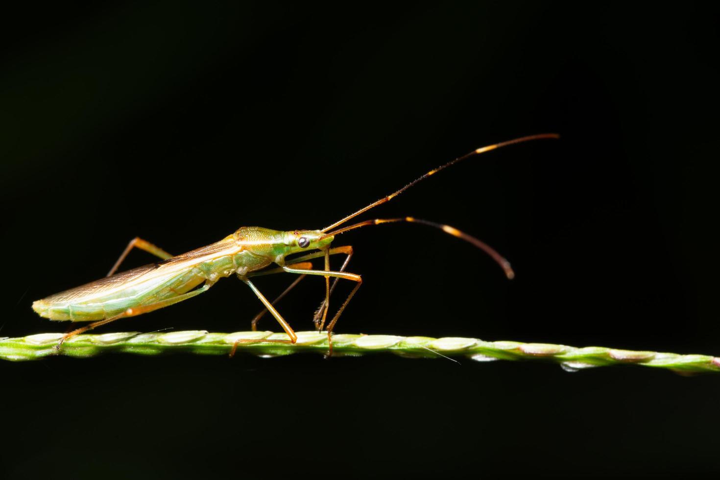 Insekt auf einem Blatt foto