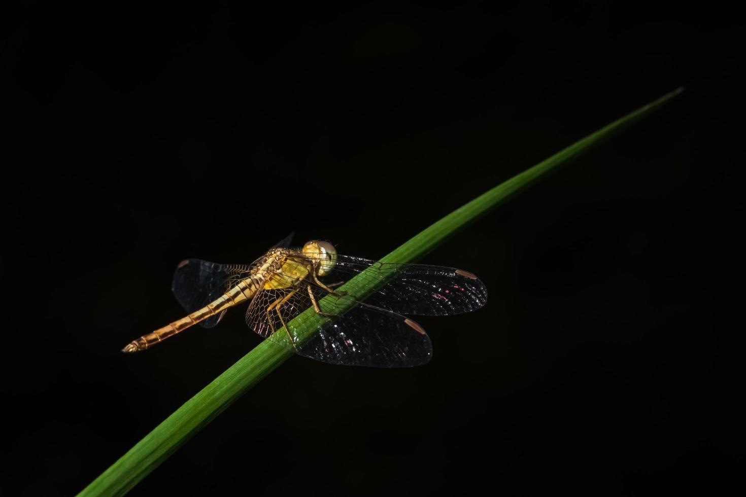 Nahaufnahme einer Libelle foto