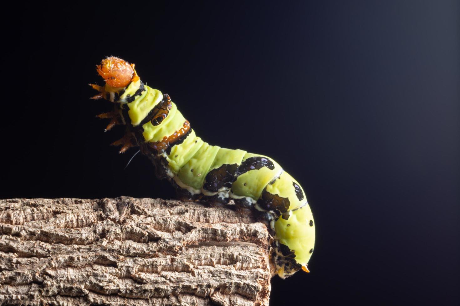 Wurm auf einem Ast foto