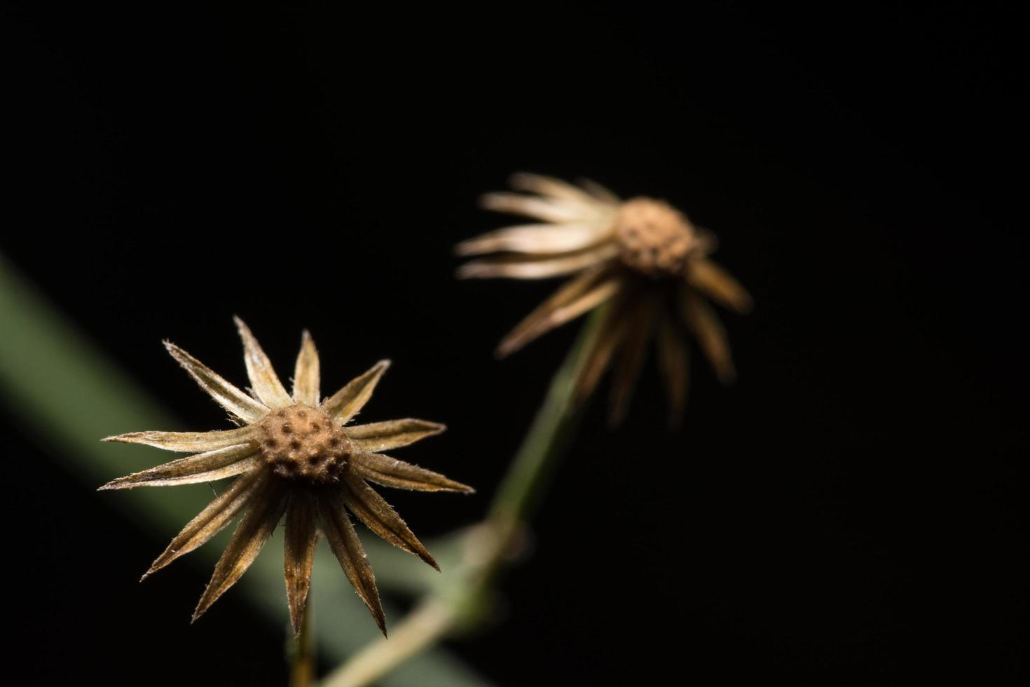 Wildblume, Nahaufnahmefoto foto