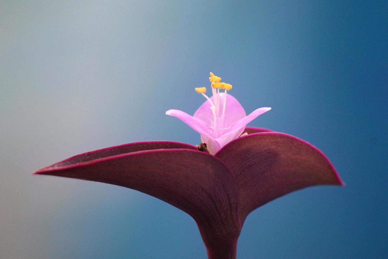 schöne Orchidee in voller Blüte foto