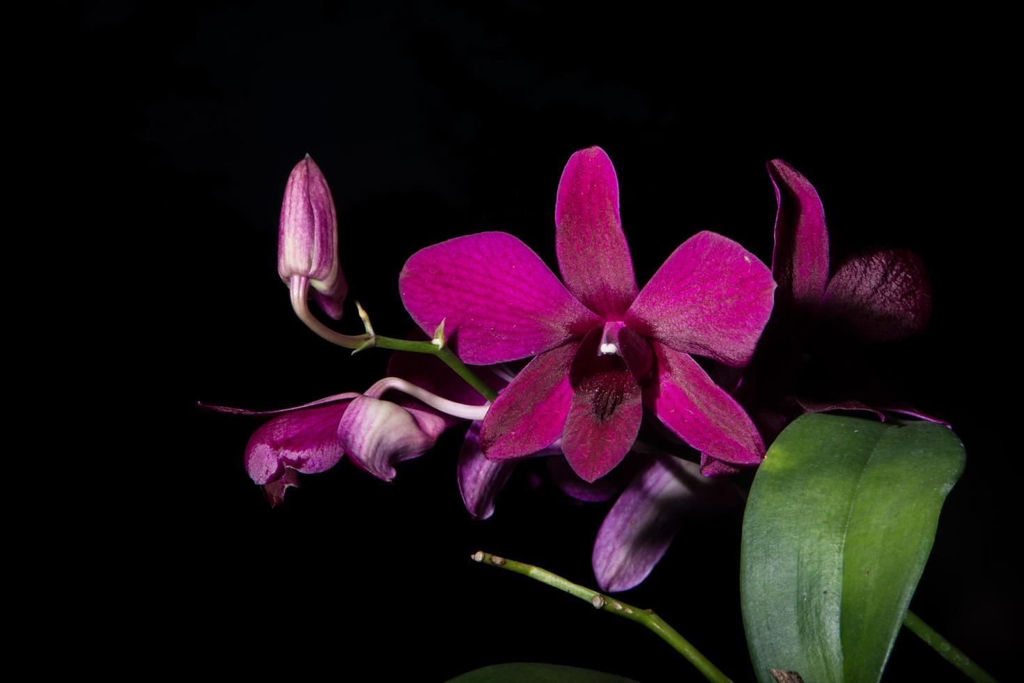 violette Blumen auf schwarzem Hintergrund foto