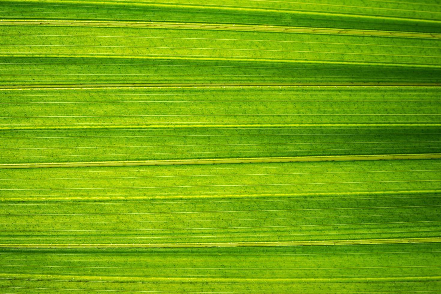 grünes Blattmuster foto