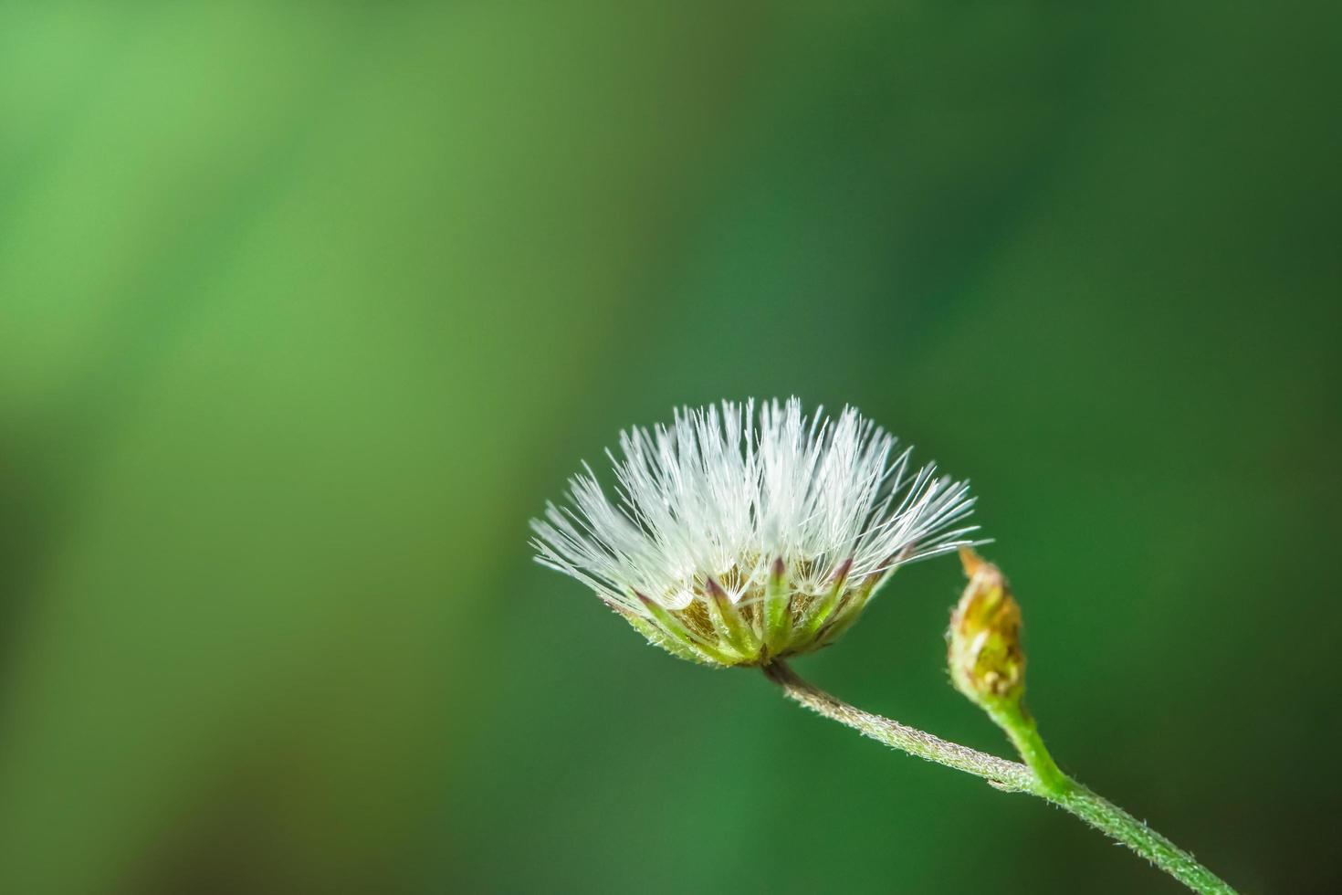 Wildblumen-Nahaufnahmefoto foto
