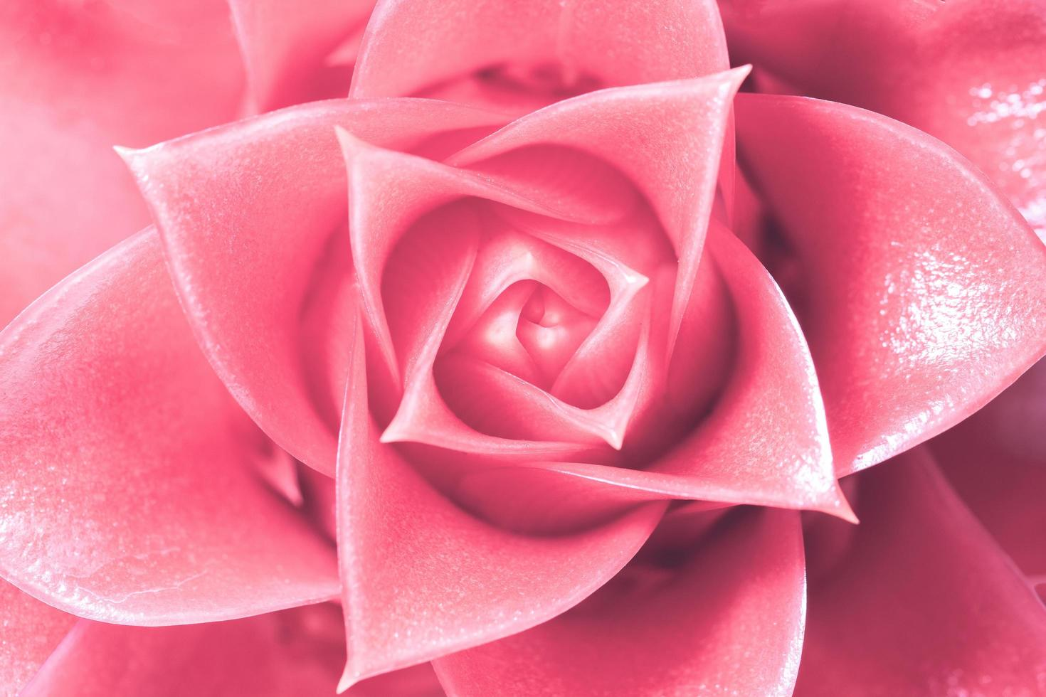hellrosa Blumenhintergrund foto