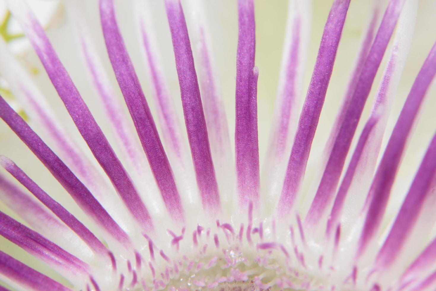 lila Blumenhintergrund foto