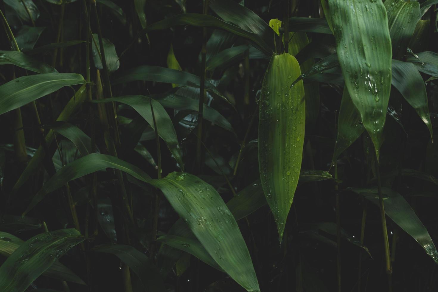 dunkelgrüner Hintergrund der Pflanzen foto