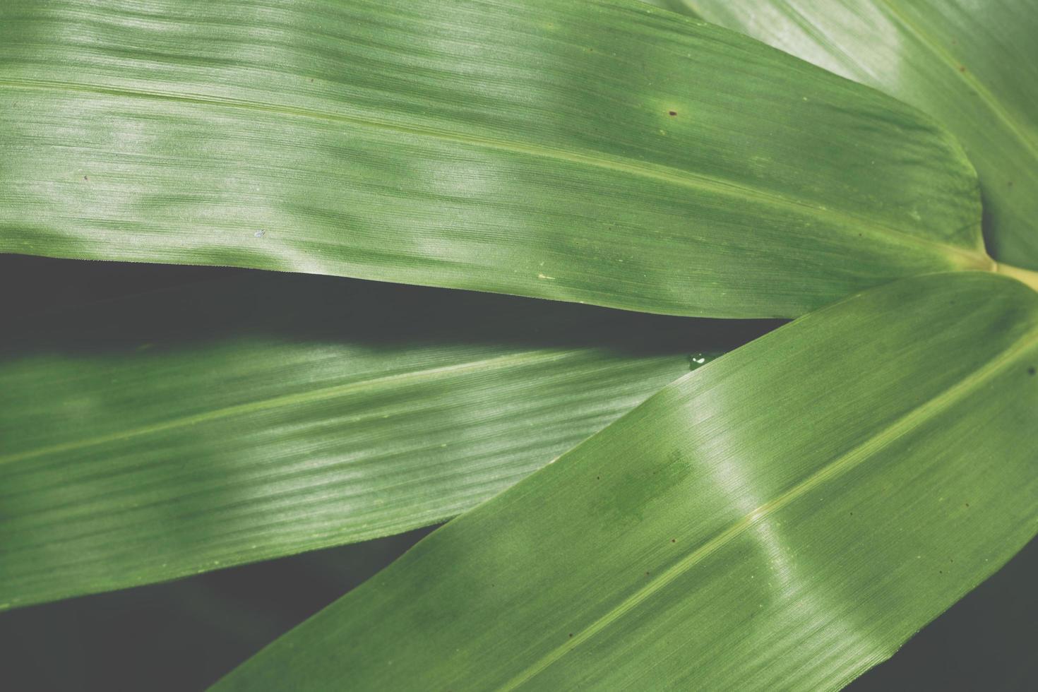 grüner Blätterhintergrund foto