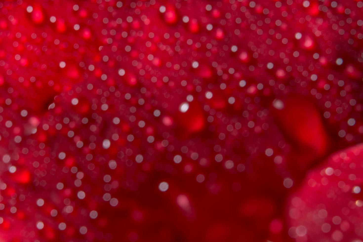 Wassertropfen auf einer roten Rose, unscharfer Hintergrund foto