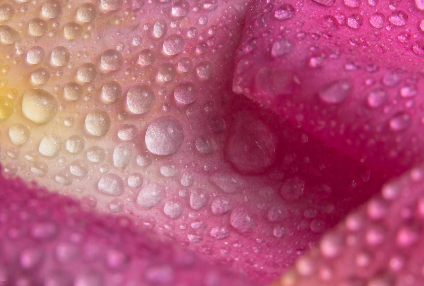 Wassertropfen auf den Blütenblättern einer rosa Rose foto