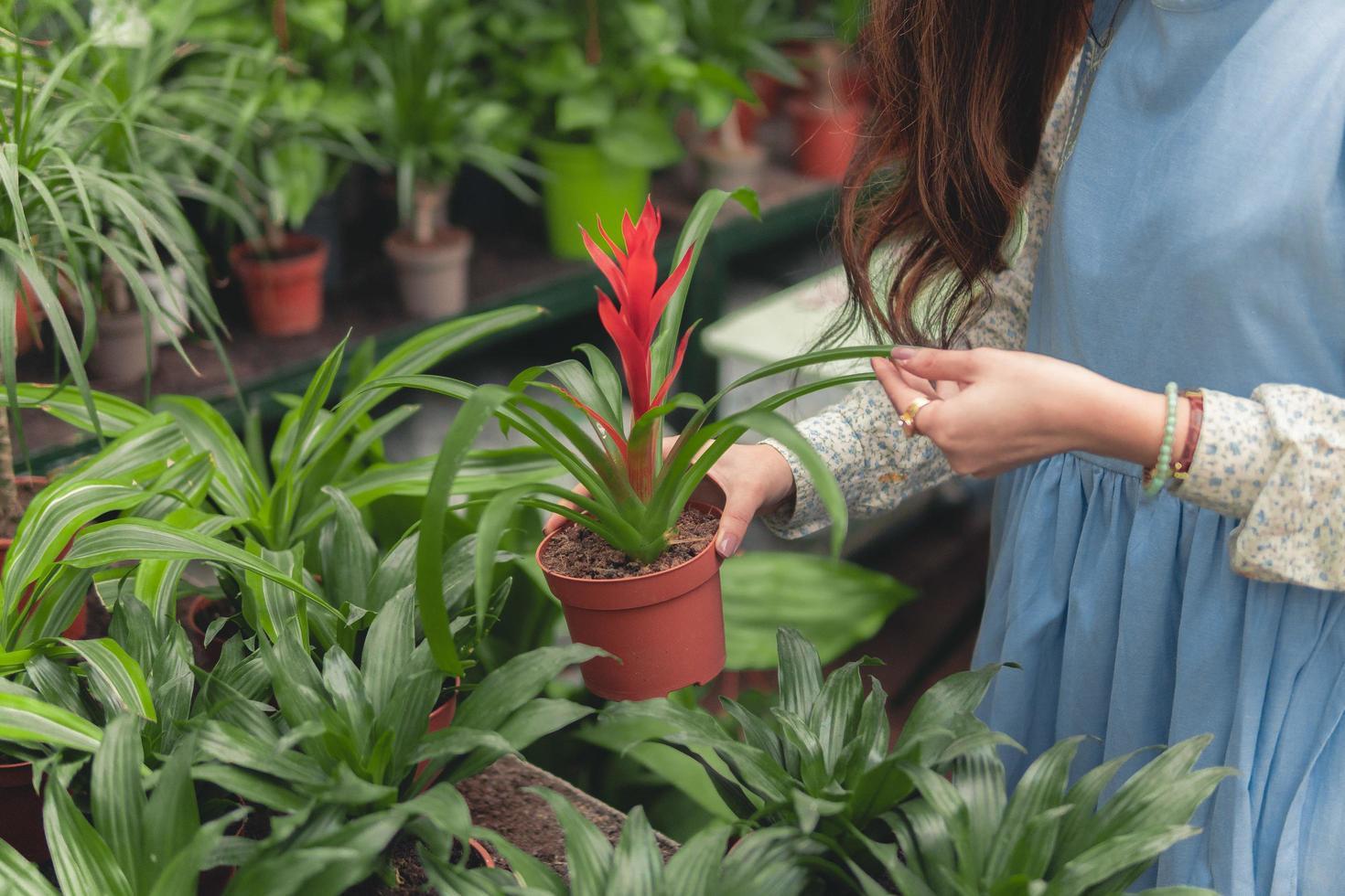Frau hält eine Topfpflanze foto