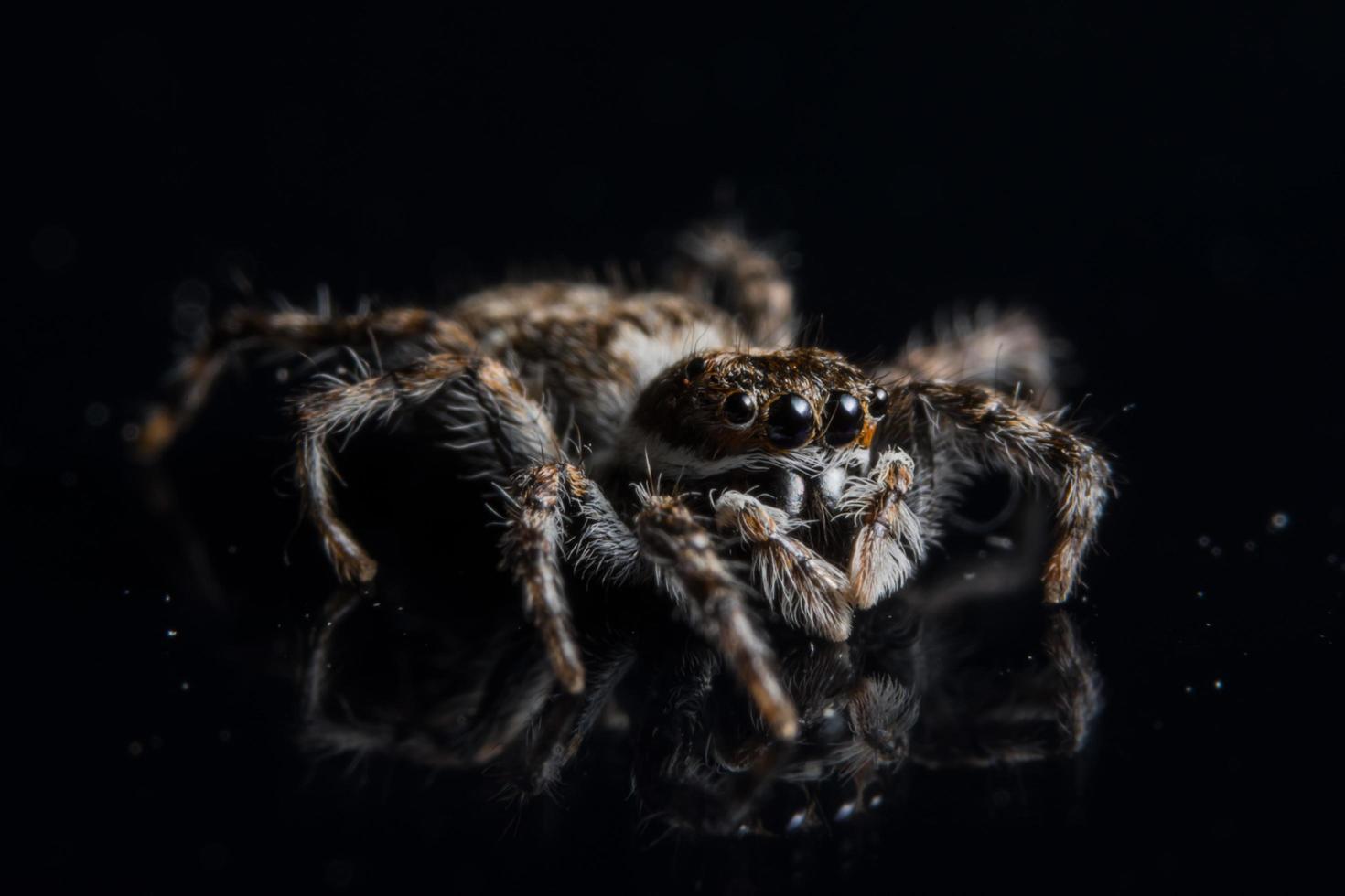 Spinne auf schwarzem Spiegel foto