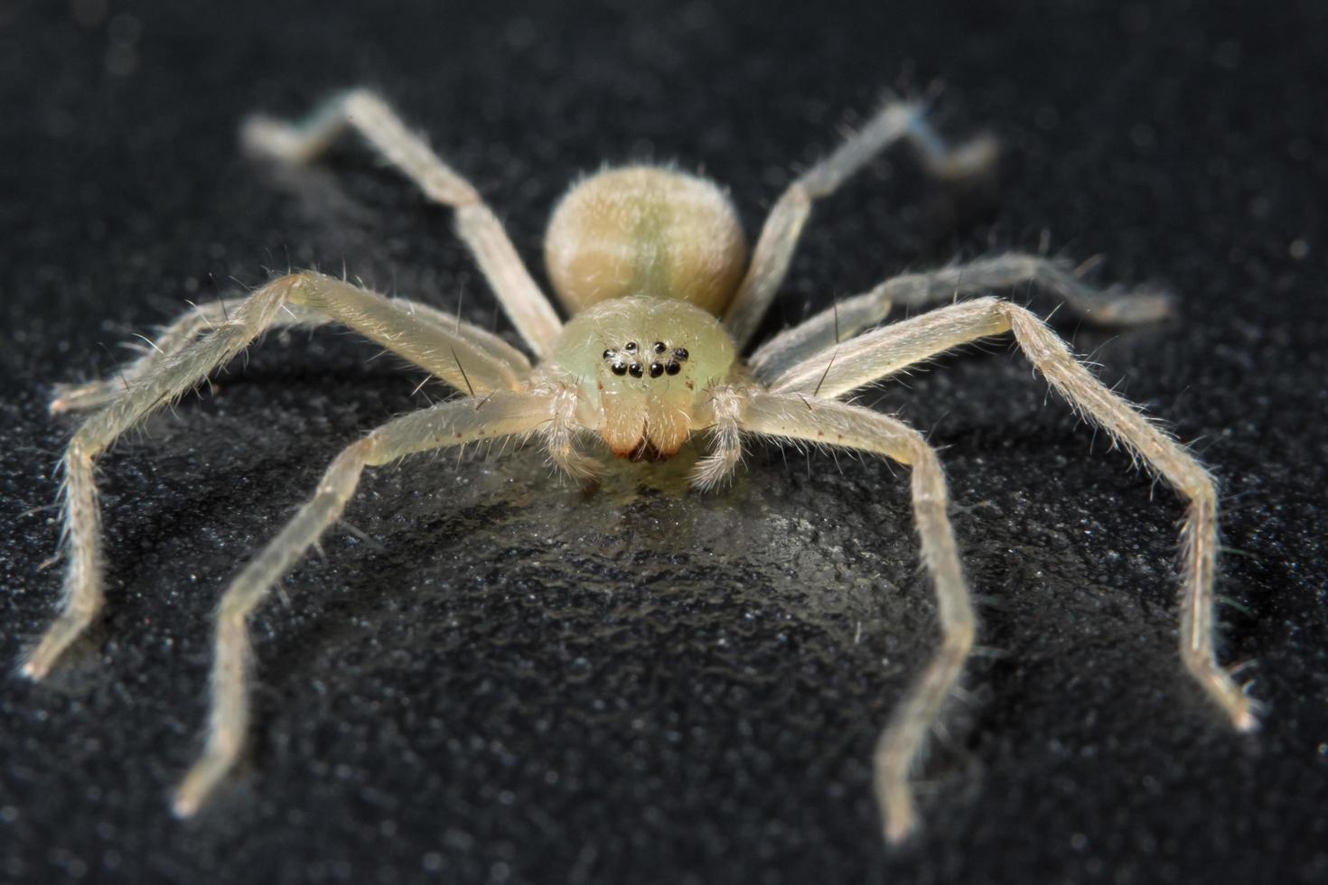 Spinne auf schwarzer Oberfläche foto