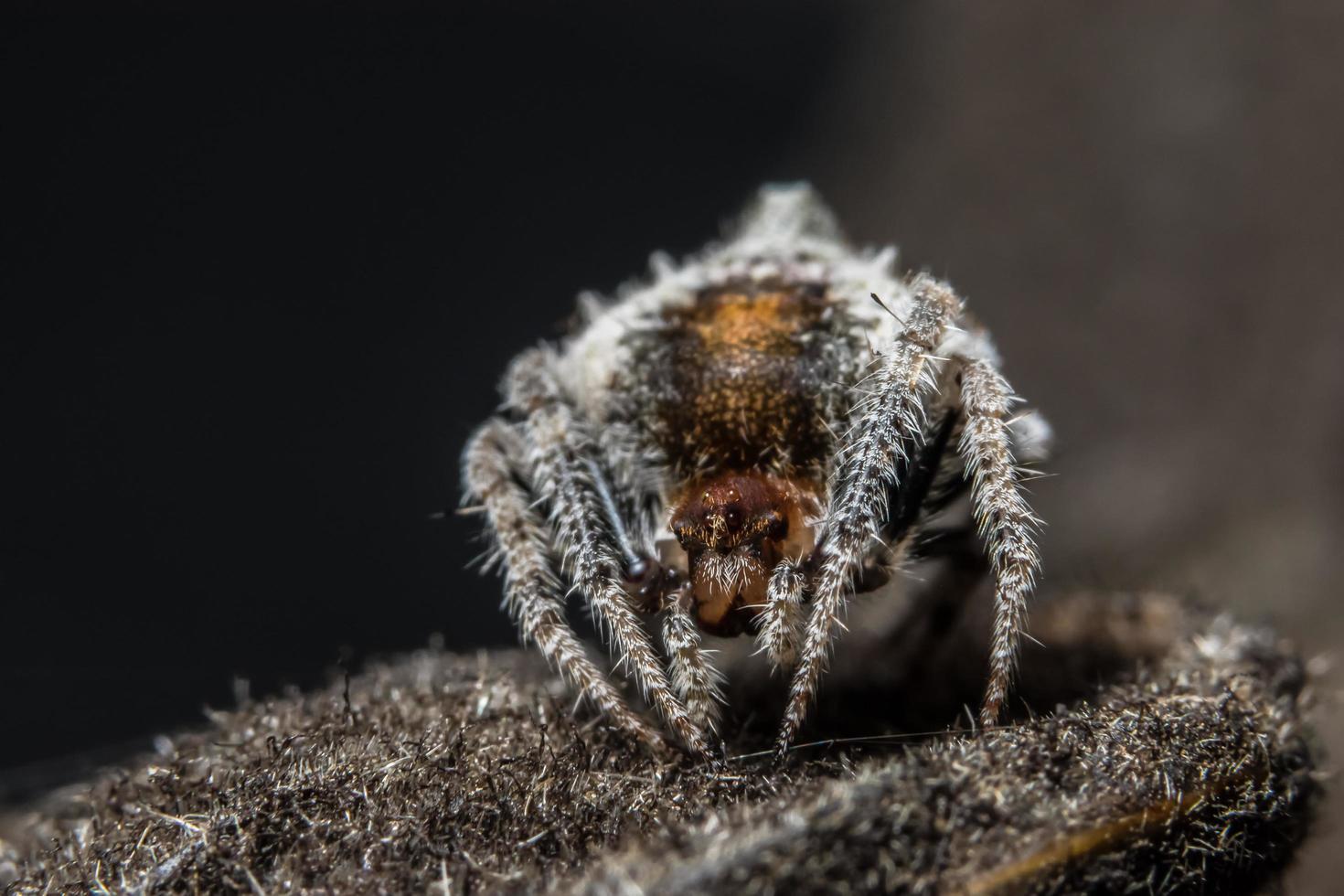 Spinne, Nahaufnahmefoto foto
