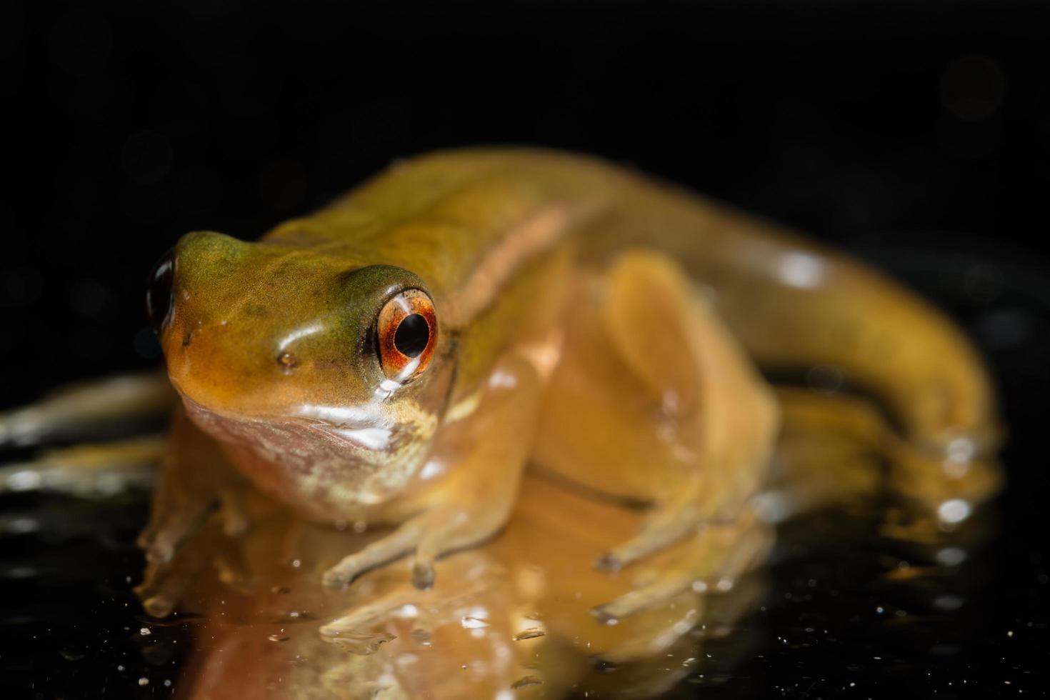 Frosch auf schwarzem Hintergrund foto