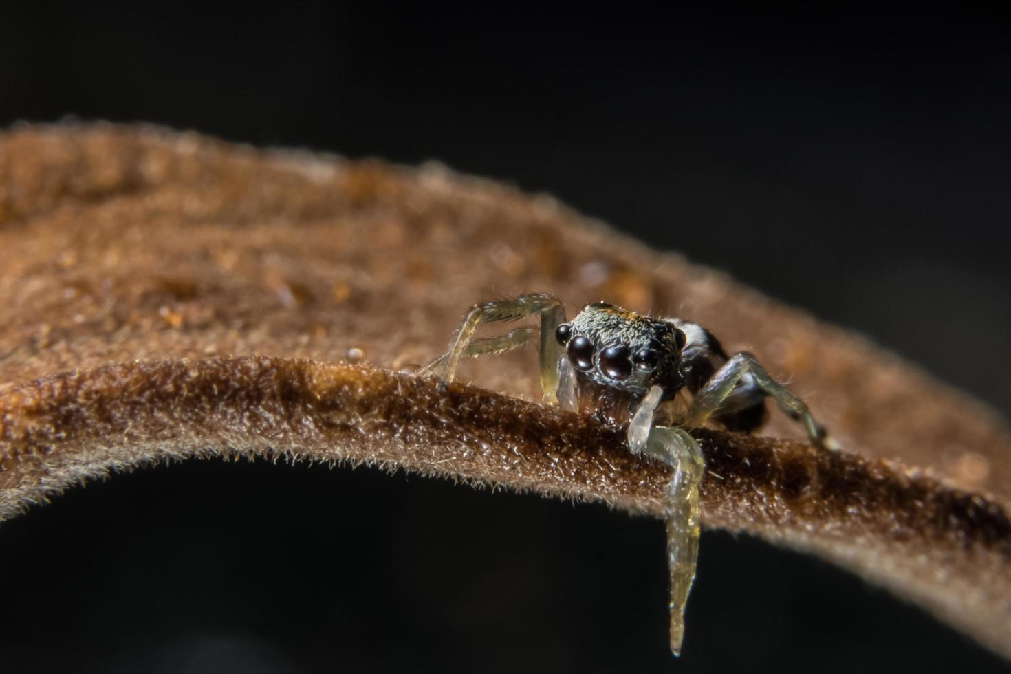 Spinne auf einem trockenen Zweig foto