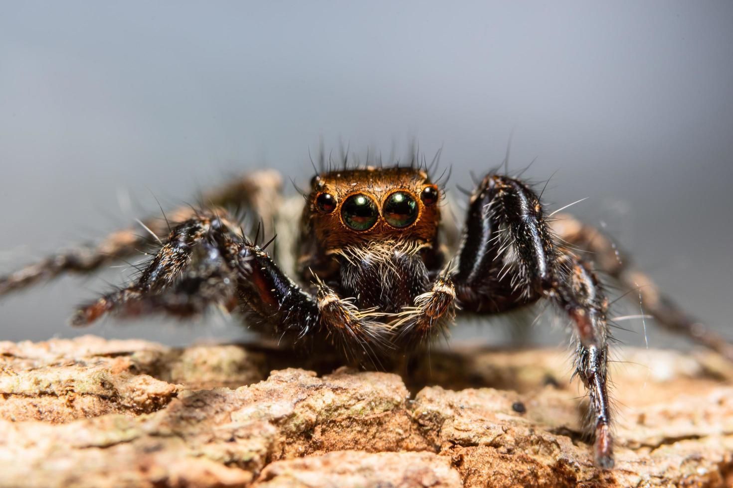 Spinne in der Natur foto